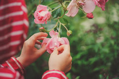 Child girl in red raincoat playing with wet rose, rainy day outdoor activities Stock Photography
