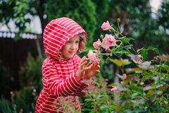 Child girl in red striped raincoat playing with wet roses in rainy summer garden. Nature care concept. Royalty Free Stock Photos