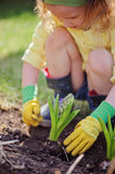 Child girl in rubber gloves planting blue hyacinth in spring garden Stock Photo
