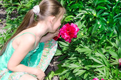 The child the girl smells a flower Royalty Free Stock Photo