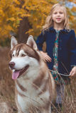 Child girl is walking with cute husky dog Royalty Free Stock Photography
