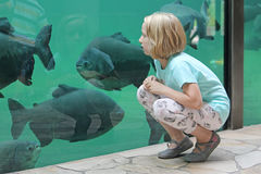 Child girl watching sea fishes in a big aquarium. Child girl watching the huge marine fish in a big aquarium Royalty Free Stock Photo