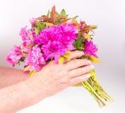 Child giving flower Stock Image