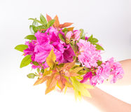 Child giving flower Stock Photography