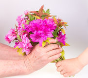 Child giving flower Royalty Free Stock Photo