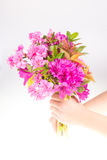 Child giving flower Royalty Free Stock Image