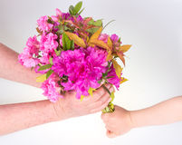Child giving flower Royalty Free Stock Images
