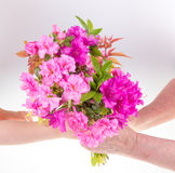 Child giving flower Stock Images