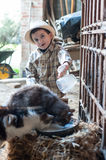 Child is giving milk to cats. Child with hat is giving milk to cats Stock Photo
