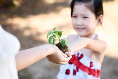 Child giving plant seedling Stock Photography