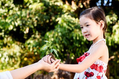 Child giving plant seedling royalty free stock photo