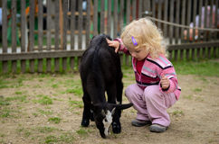 Child and the goat Stock Photography
