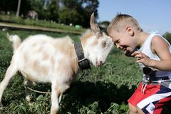 Child and goat head butting. Child and goat playing through head butting stock photo