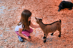 Child and goat Royalty Free Stock Photography