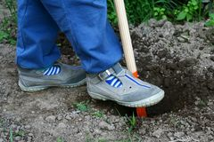 Child in gray shoes digging a hole with orange toy spade. Green weedery in background stock photo