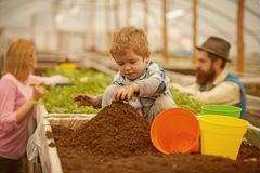 Child in greenhouse. small child in greenhouse. child in greenhouse with parents. child work in greenhouse. kid royalty free stock photography