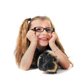 Child Guinea pig Royalty Free Stock Photos