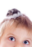 Child with hamster. Little girl with grey hamster on head Stock Photo