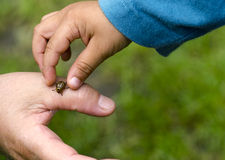 Child hand and colorado bug Royalty Free Stock Photos