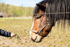 Child hand feeding horse Royalty Free Stock Photography