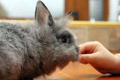 Child hand feeding rabbit Stock Images