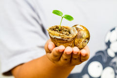Child hand holding crust shellfish. With young green plant Stock Image