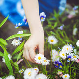 Child hand holding a flower Stock Photo