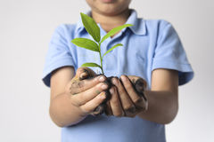 Child hand holding litter plant Royalty Free Stock Photos