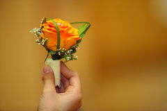 Child hand holding orange rose Royalty Free Stock Photos