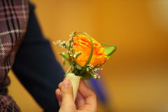 Child hand holding orange rose Stock Photos