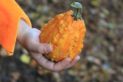 Child hand holding small orange pumpkin Royalty Free Stock Photos