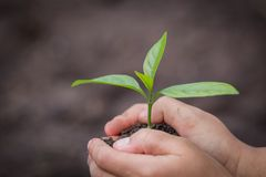 Child hand holding a small seedling, plant a tree, reduce global warming, World Environment Day.  royalty free stock photo