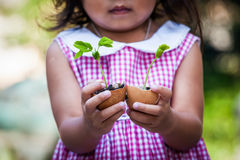 Child  hand holding young tree in egg shell Royalty Free Stock Photos