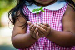 Child  hand holding young tree in egg shell Stock Photo