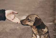 Child hand and lonely homeless dog Royalty Free Stock Image