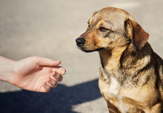 Child hand and lonely homeless dog Royalty Free Stock Photo