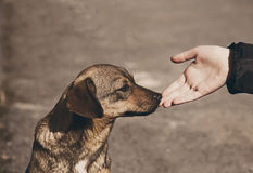 Child hand and lonely homeless dog Stock Photos