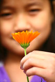 Child  hand picking up a a  daisy flower Royalty Free Stock Image