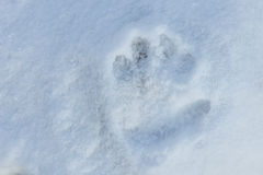 Child hand print in the snow Stock Photos