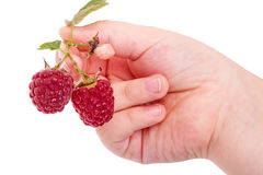 Child hand with raspberries Royalty Free Stock Photos