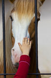 Child hand stroke horse in captivity Stock Images