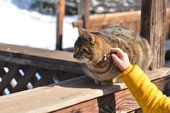 Child hand touches cat. Child hand gently touches brown tabby cat outdoor stock photo