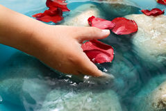 Child hand water and petals. Child hand, water, stones and red rose petals Royalty Free Stock Photography