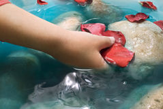 Child hand water and petals. Child hand, water, stones and red rose petals Royalty Free Stock Photos