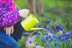 Child hand watering a plant with watering can. royalty free stock photo