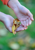 Child hands Royalty Free Stock Photography
