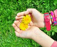 Child hands with flower Stock Images