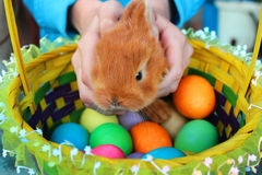 Child hands hold little red easter bunny and put it in a basket with colored eggs Royalty Free Stock Photography