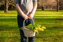 Child hands holding a basket with spring yellow tulips in sunny spring park. copy space. stock photo