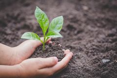 Child hands holding and caring a young green plant, Seedlings are growing from abundant soil, planting tree, reduce global warming. Growing a tree, love nature stock photography